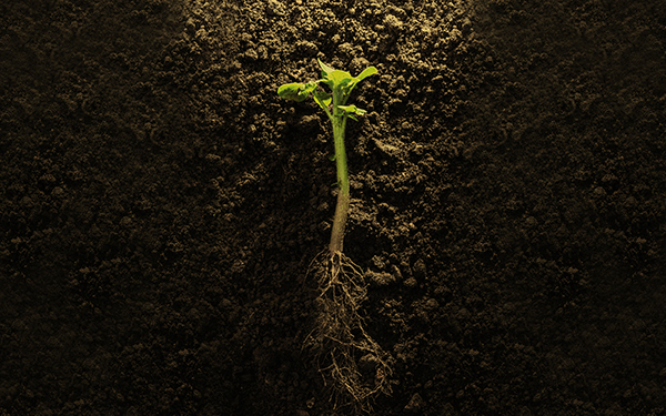 green plant with roots on soil image 2